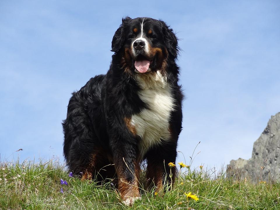 2 races de chiens noirs, de toute beauté