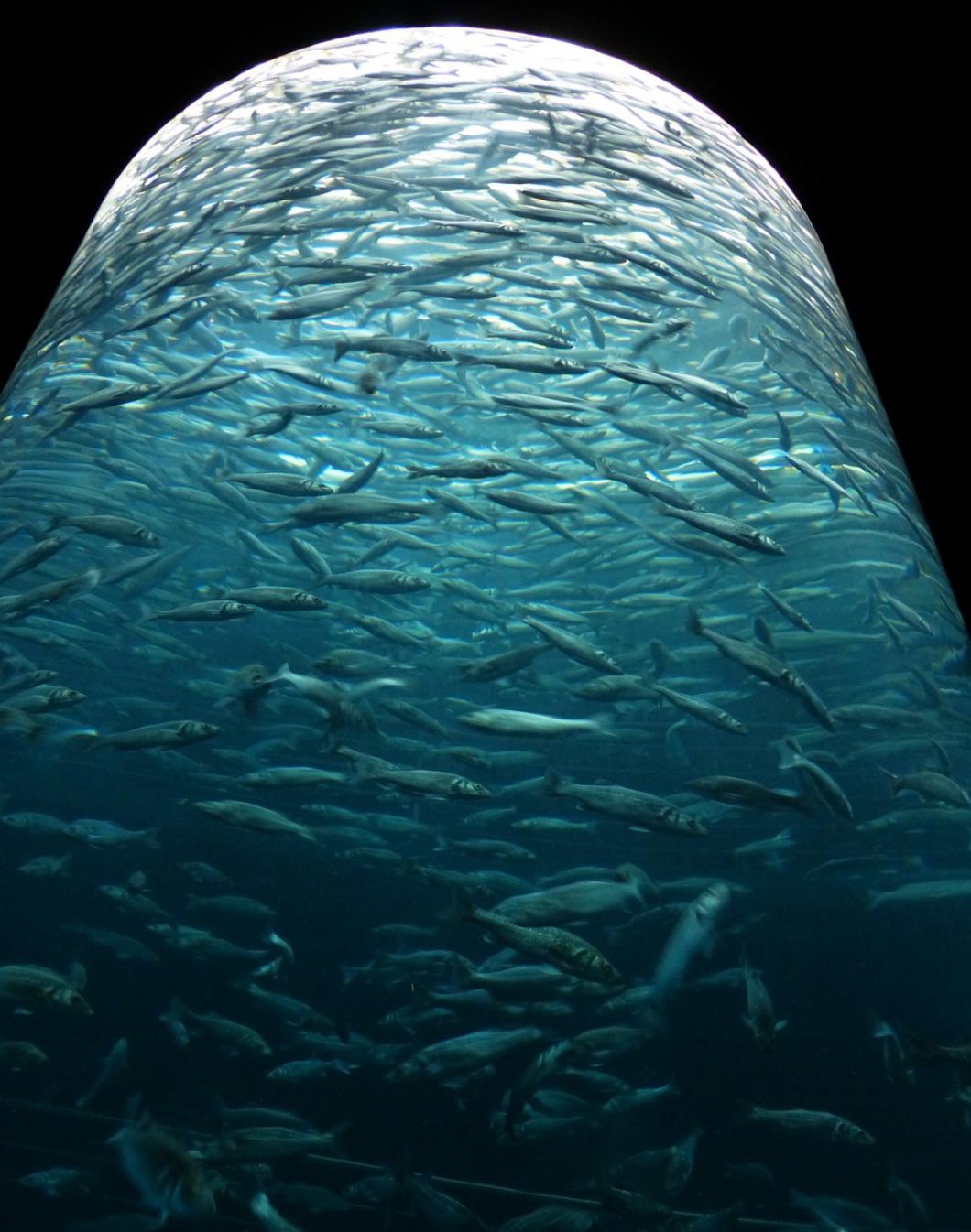 La sardine boite : un produit de caractère